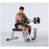 Tuff Stuff Seated Arm Curl Bench CAC 365  CAC-365